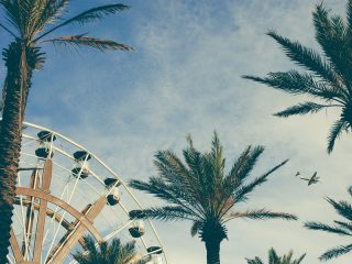 Ferris wheel and palm tress in the foreground with airplane flying overhead.